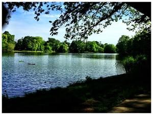 Prospect Park Lake #1